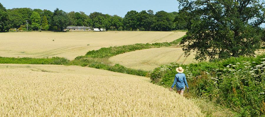 Durleighmarsh Farm Walk